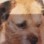 Hond 4